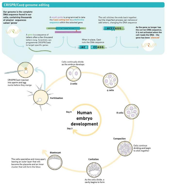 infographic_crop